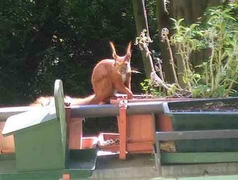 Hoernchen-auf-Balkon2